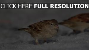 frühling schnee ptah makro sperling sonne
