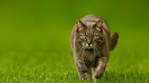 frühling grün rasen katze natur