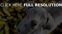 kopf beobachten schauen hunde neugier