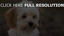 gesicht welpen schön hunde