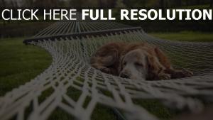 hängematte unten liegen hund schlafen