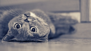 liegend traum kopf katze