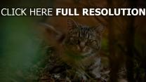 laub gras herbst katze licht