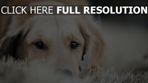 maulkorb schlafen hunde