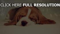 traum schön hundeschnauze hunde getupft