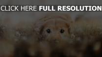 gesicht augen hund