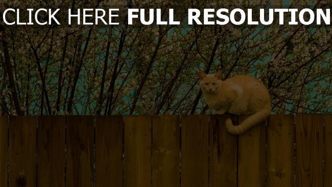hd hintergrundbilder zaun natur sitzen katze
