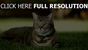 gras unten liegen katze gestreift