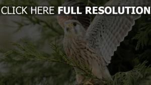 räuber holz flügel vogel