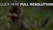 kräuter nüsse chipmunk
