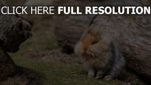 gras holz kaninchen