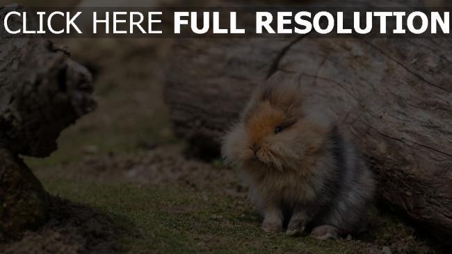 hd hintergrundbilder gras holz kaninchen