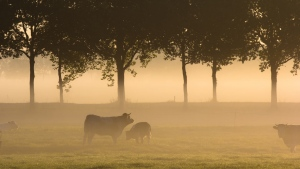 gras wald bäume nebel stiere feld