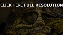 augen flecken krokodil