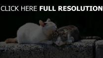 paar verspielt fürsorglich katzen
