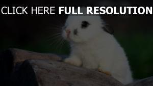 getupft niedlich kaninchen