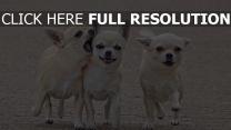 welpen spaziergang hunde