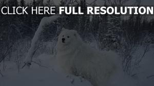 schnee spaziergang hund bäume