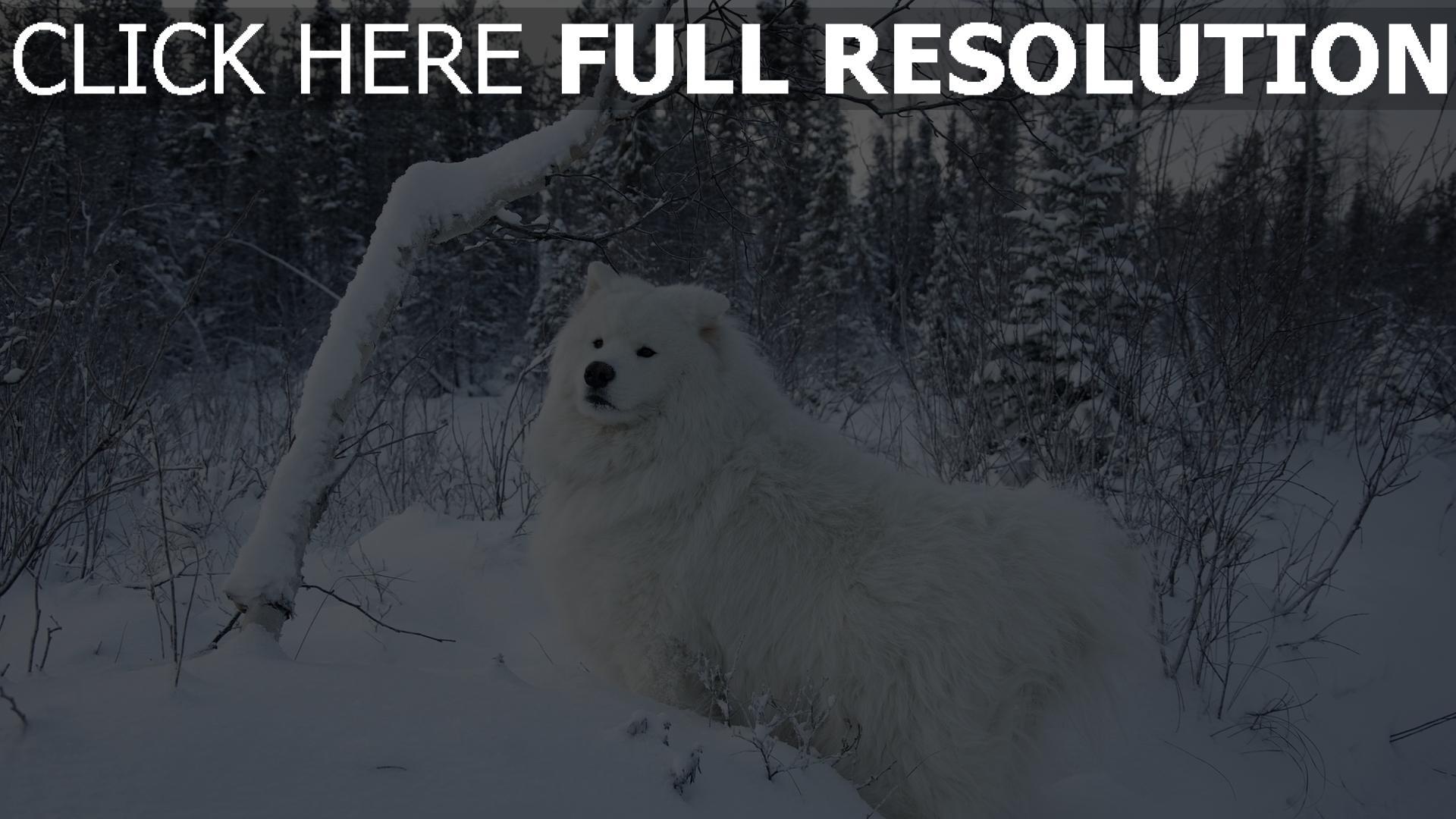 hd hintergrundbilder schnee spaziergang hund bäume 1920x1080