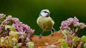 blume zweig vogel