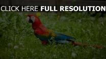 gras hell vogel papagei