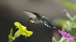 vögel blätter blumen kolibris schleife