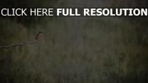 vogel sitzen zweig eisvögel