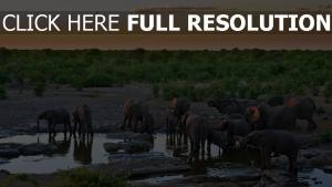 bewässerung natur wasser elefanten