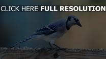 zweig sitzen farbe vogel