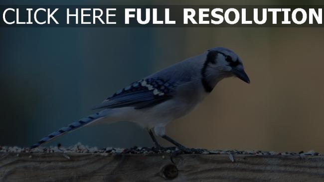 hd hintergrundbilder zweig sitzen farbe vogel