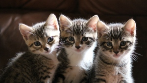 drei zu sehen sitzen kätzchen