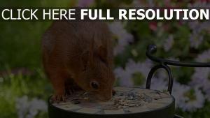 nagetier ernährung essen eichhörnchen trog