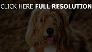 maulkorb flauschige hund zunge