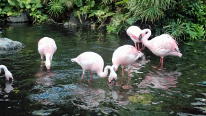 vögel trinken fluss flamingos pflanzen
