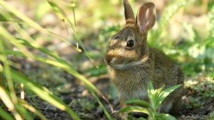 kaninchen schatten ohren gras maulkorb