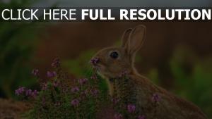 blumen kaninchen gras kaninchen unschärfe