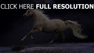 schön mähne laufen pferd nacht himmel