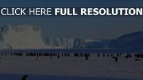 eisscholle antarktis schnee pinguine