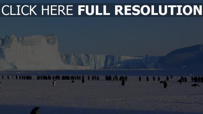 hd hintergrundbilder eisscholle antarktis schnee pinguine