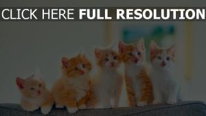 pickelig sofa katzen kätzchen