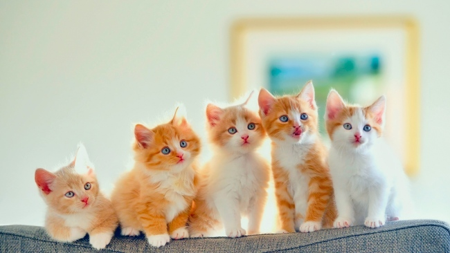 hd hintergrundbilder pickelig sofa katzen kätzchen