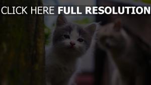 getupft schauen im freien kätzchen