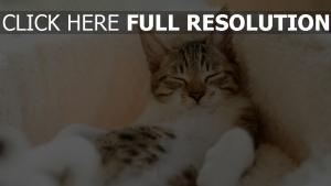 liegend gefleckte katze