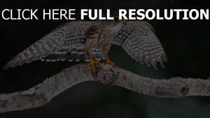 flügel adler flatternde vogel