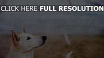 federn flug hund