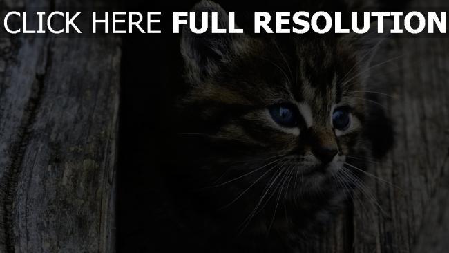 hd hintergrundbilder augen gesicht flauschige kätzchen