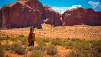 valley usa arizona pferde denkmäler