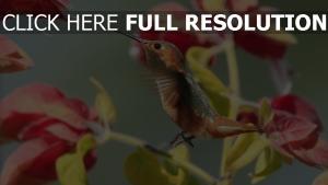 blumen vogel zweig kolibri