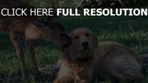 hirsche freundschaft hund