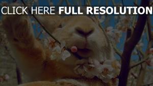 frühling gesicht blumen kaninchen